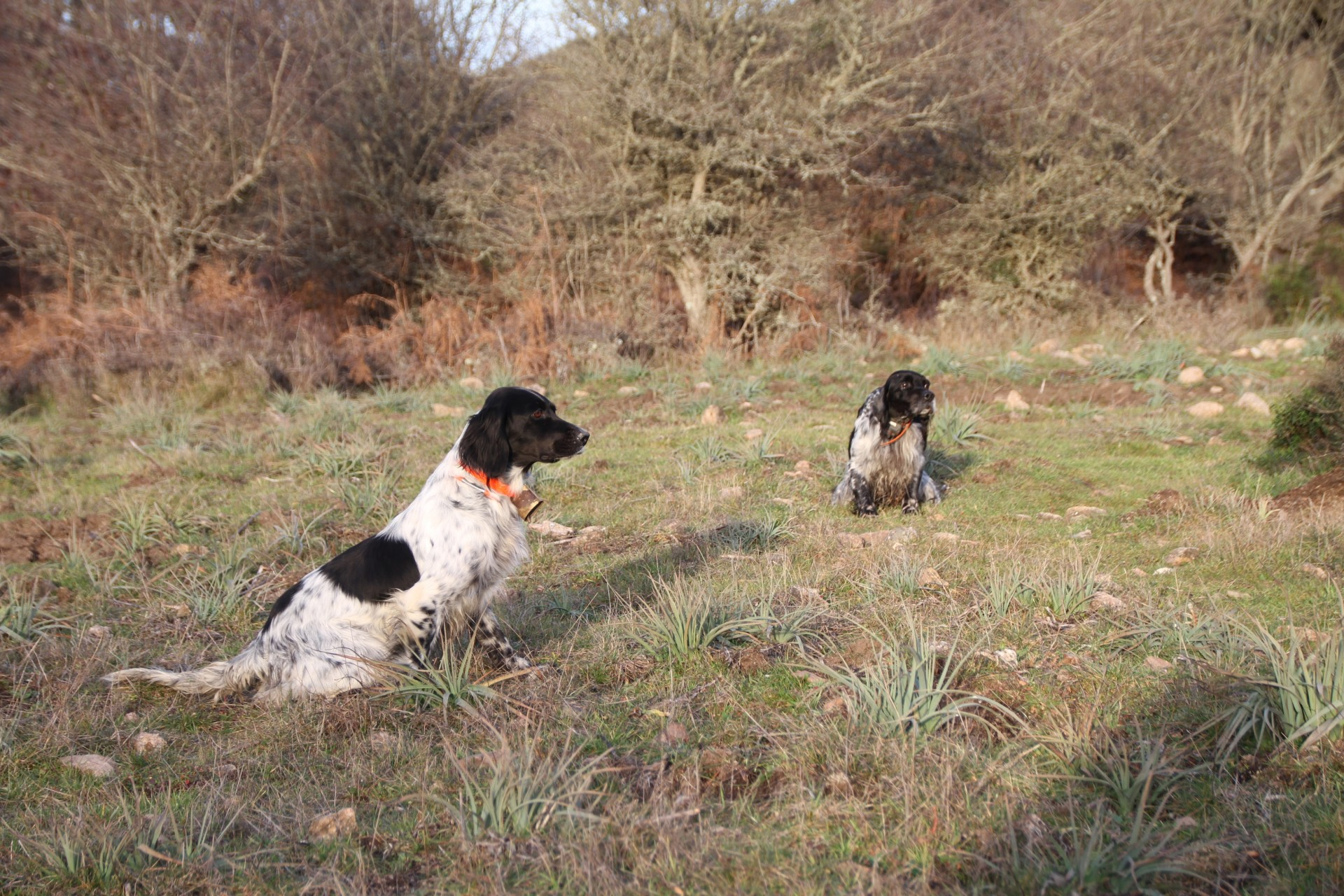 Dresseur chiens de chasse à Ajaccio | Domaine du Gibier