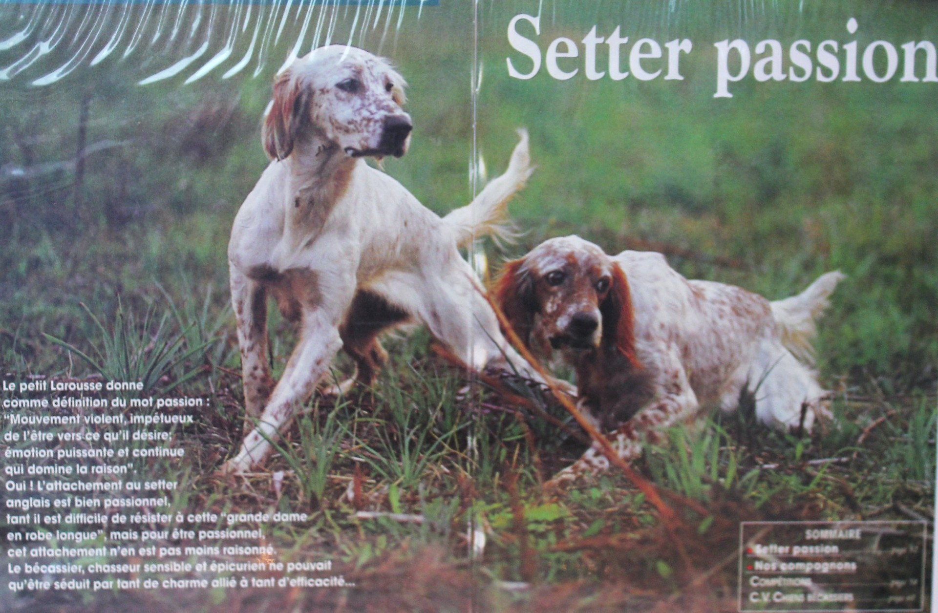 Dresseur chiens d'arrêt et pension canine à Ajaccio